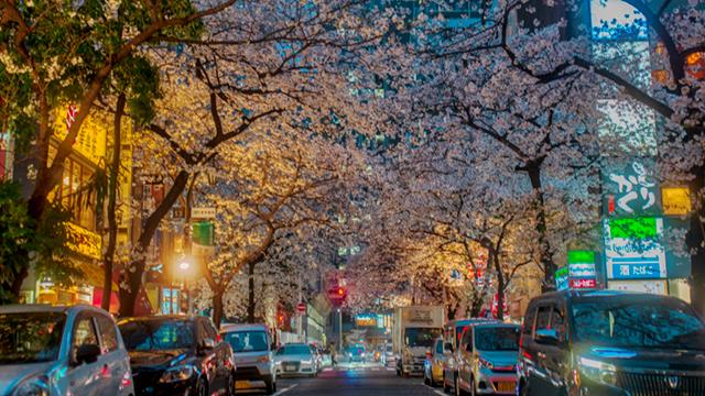 桜を背景に女の子を撮りたい人生だった